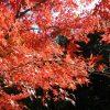 経産省「PHOTO METI PROJECT」で日本全国の風景写真をフリー素材として公開 無料で転載、改変OKの大盤振る舞い